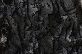 Burnt Monterey Pine Tree Bark (pinus Radiata) poster