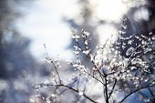 Branches Covered With Snow And Ice On Blur Background And Sunflare poster