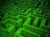 Grünes Labyrinth