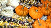 Corn And Pumpkins