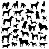 foto of pitbull  - Dogs silhouette set  - JPG
