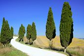 stock photo of senesi  - Cypress Trees rows and a white road rural landscape in Crete Senesi land near Siena Tuscany Italy Europe - JPG