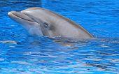 peaceful dolphin