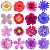 pic of zinnias  - Big Selection of Colorful Flowers Isolated on White Background - JPG