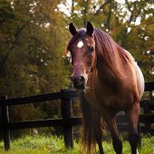 Dramatic Autumn Horse