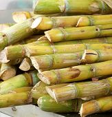 Cut Sugar Cane For Sale