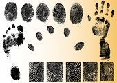 Vector Fingerprint Elements