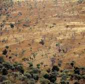 stock photo of dogon  - Growing near the Dogon village Banani Mali - JPG