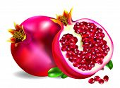 Illustrated Pomegranate