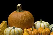 stock photo of happy thanksgiving  - variety of orange and white pumpkins on a black background - JPG