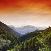 alpen mountain forest sun shine