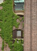 Brick Wall With European Ivy