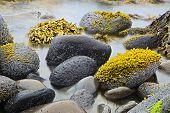 las algas verdes o algas en las rocas en la costa rocosa de la costa salvaje naturaleza detalle Costa paisaje ba