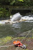 picture of steelhead  - Rotary Screw Trap Device Used by United States Washington Fish and Wildlife Department Along River to Catch and Release Downstream Outmigrants Fishes for Research at Cedar Creek - JPG