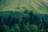 Coniferous Deep Forest In Mountains Caucasus Beautiful Landscape
