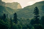 Coniferous Deep Forest In Mountains Caucasus Beautiful Landscape