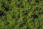 Cape Espichel Prickly Flora
