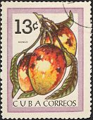 Tropical Fruit - Mango