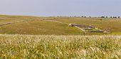 Pastures Panorama