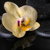 Beautiful Spa Setting Of Yellow Orchid (phalaenopsis), Zen Stones With Drops On Ripple Reflection Wa