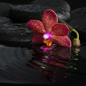 Spa Concept  Of Dark Purple Orchid (phalaenopsis) With Bud, Zen Stones With Drops On Ripple Water, C