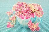 pic of hydrangea  - Pink hydrangea flowers in a cup on a blue background  - JPG