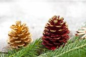 Christmas Spruce Branches And Cones