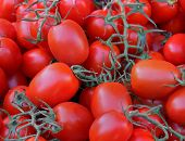 picture of plum tomato  - Pile of red plum tomatoes on vine - JPG