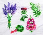 stock photo of lavender field  - Flower grass set drawn watercolor blots and stains with a spray lavender - JPG