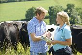 foto of dairy cattle  - Dairy Farmer Talking To Vet In Field With Cattle In Background - JPG