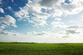 Landscape of green corn field with beautiful sky