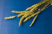 Ripe Wheat On Blue Background