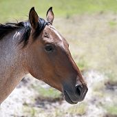 Side View Of A Roan Colored Horse