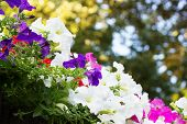 Flowerbed Of Colorful Flowers