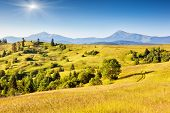 Fantastic yellow hills with summer blue sky. Carpathian, Ukraine, Europe. Beauty world.