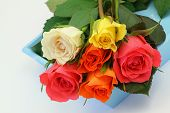 Colorful roses on blue tray, close up