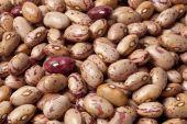 image of phaseolus  - Pinto beans Phaseolus vulgaris close up full frame - JPG