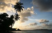 Palm Trees on the sea shore at sunset in the Dominican Republic