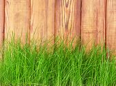 Fresh spring green grass over wood fence