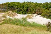 Dune Near Baltic Sea
