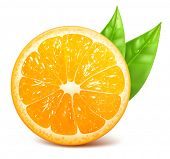 Vector illustration of fresh ripe orange with leaf.