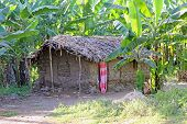 Mud Hut In A Tropical Forest