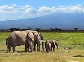 stock photo of kilimanjaro  - Kilimanjaro elephants in Amboseli National Park - JPG