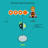 Information About The Queen Bee