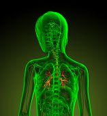 3D Render Medical Illustration Of The Human Bronchi