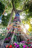 picture of holy-spirit  - Three fabric color wrap the old tree the belief in thailand Holy tree with spirit inside in Asian - JPG