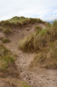 Path Through Dunes At The Maharees