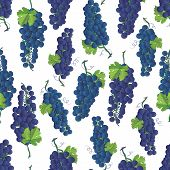 Violet grapes vector seamless pattern