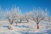 winter sets