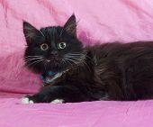 Black Fluffy Kitten Lying On Pink